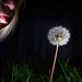 26/365 The last dandelion