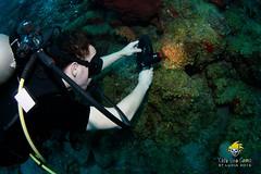 slu_bradh_V55A6194595 (kaufmankronicle) Tags: 2016 diving kidsseacamp stlucia