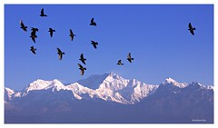 Himalayan morning,Darjeeling (Anindya_Doordarshan) Tags: kanchanjungha kanchendzonga kabru kangchenjunga kanchenjungha kanchanjangha talung kabrudome kabrunorth kabrusouth singalila snow summit pandim peak range rathong ngc