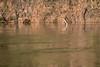 Up Periscope (jeff_a_goldberg) Tags: sarapiquiriver anhingaanhinga anhinga darter naturalhabitatadventures nathab winter costarica heredia cr