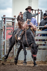 Vulcan Rodeo 2015 (tallhuskymike) Tags: vulcan rodeo fca foothillscowboysassociation cowboy horse action event outdoors 2015