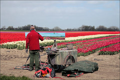 Schilderachtig (TeunisHaveman) Tags: tup bloem painting groningslandschap bollenveld flower flowers