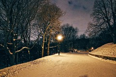 Marche sur Mont-Royal. (In Julie's lens) Tags: iso5000 grain montreal mont royal mount observation deck nature road night light shadows trees tree street alone rokinon rokinon14mm 14mm f28 winter snow quebec explore wide wideangle canonsl1 belvedere
