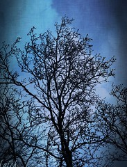 winter silhouette (MissyPenny) Tags: silhouette tree branches bristolpennsylvania pdlaich winter blue