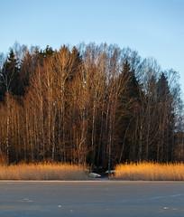opposite shore (Antti Tassberg) Tags: kaislikko luonto landscape pitkäjärvi netsä talvi outdoor vene ranta beach bedofreeds boat järvi lake nature rushes shore winter espoo uusimaa finland fi