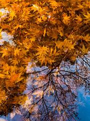 PhoTones Works #8301 (TAKUMA KIMURA) Tags: landscape nature japan okayama mountain plant dusk sunset 風景 景色 自然 日本 岡山 山 木 植物 夕暮れ 日差し