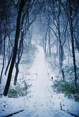 The wintertime (BogdanFilmshooter) Tags: grain filmgrain winter vintage kodak analog film