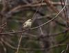 House Finch (northamericaroks) Tags: outdoor bird animal branchlet plant ave pajaro nature backyard feeder songbird finch charlottesville virginia wildlife