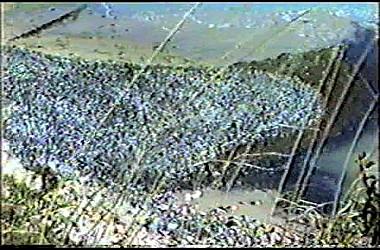 sturmflut 89NDVD_047