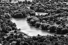 The river (Jaime Recabal) Tags: canon 40d recabal gurabo monochrome blackandwhite blancoynegro rio riograndedeloiza naturaleza