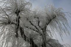winter wonderland (hjvandervegt) Tags: 2017 nederland netherlands holland kampen overijssel winter sneeuw snow landschap landscape wit white