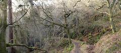 birnam woods (stusmith_uk) Tags: scotland landscape perthshire birnam birnamwoods january 2017 winter trees
