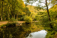 The still of autumn (Keith in Exeter) Tags: autumn still water river stream tree forest woodland fall reflection landscape outdoor foliage dartmoor nationalpark devon uk