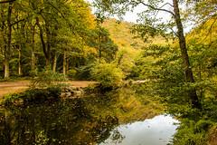 The still of autumn