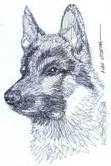 perro a lapicero (ivanutrera) Tags: draw dibujo drawing dibujoalapicero boligrafo animal canino perro perrito sketch sketching lapicero pen dog dibujoaboligrafo