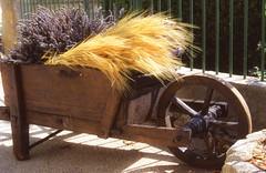 provence001-Edit (playapic) Tags: provence gigondas wheelbarrow planter lavender summer