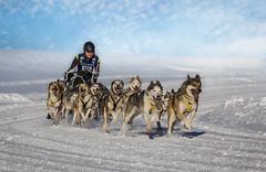 Deutschlandcup der Schlittenhunde-6 (roland_lehnhardt) Tags: canon eos60d sigma120400mm winter schnee snow badhindelang unterjoch allgäu schlittenhunde schlittenhundeführer musher husky dogsledding sledgedogs internationalesschlittenhunderennen
