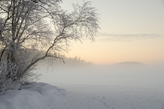 Winter Landscape (Mikael R.) Tags: finland winter fog ice snow dusk sunset tree nature landscape nikon d7000 sigma1750mm cold frozen