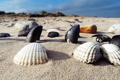 Seashells by the seashore (Chris Goodacre) Tags: olympusstylus1 eastcoast titchwell chrisg35mm