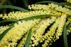 CW149 Longwood Flowers (listentoreason) Tags: usa plant nature closeup america canon unitedstates pennsylvania favorites places longwoodgardens ef28135mmf3556isusm score30