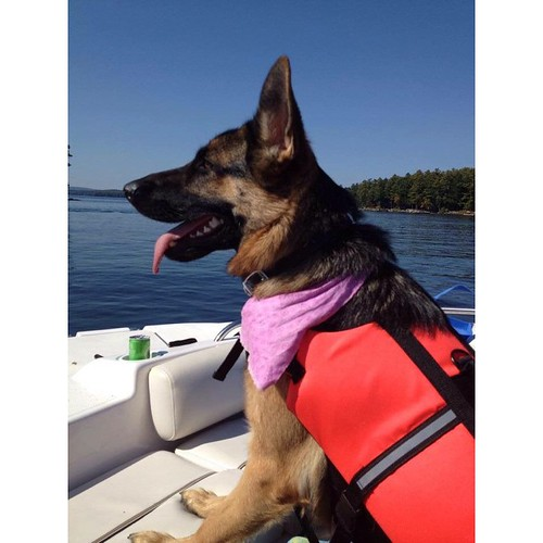 Dog captain is ready! #ribcruises #Boat #rentaboat