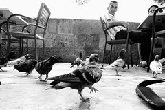 Pigeons and Dude (The Johann Espiritu) Tags: leica 35mm 21 malta konica 35 select 21mm m240 dualhexanon