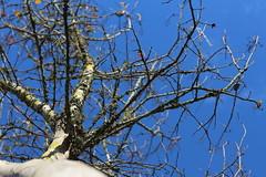 profissão: quebra-galho (Rodrigo Alceu Baliza) Tags: tree up 50mm profissão quebragalho
