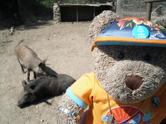 """""""These two are boared - geddit?"""" (pefkosmad) Tags: bear park vacation holiday ted animals fun toy funny teddy farm joke hellas fluffy humour greece softie plushie greekislands griechenland rodos rhodes boar pun stuffie dodecanese ostrichfarm tedricstudmuffin tedrhodes2015"""
