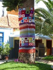 New season, new clothes (paramonguino) Tags: tree rbol tenerife canaryislands baum islascanarias kanarischeinseln 050715 p1290547 copiarw547jpg