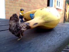 That's how monkeys do it (188/365) (robjvale) Tags: nature animal monkey lego banana learning knowledge surprised opening amazed realisation whoknew discovering project365 adventurerjoe
