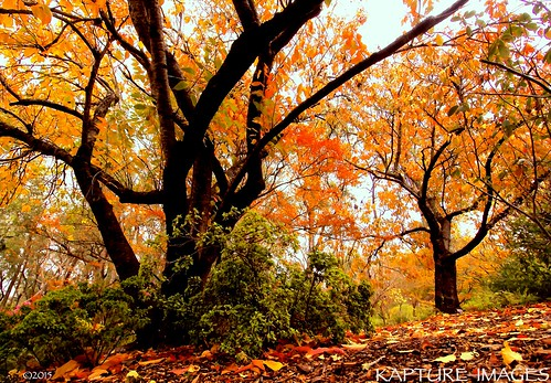 Lofty autum trees