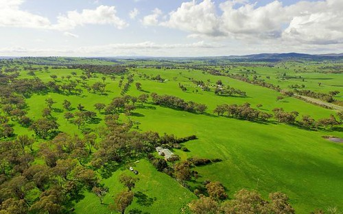 Buringa & Patrician - 1609 Mitchell Highway, Orange NSW 2800