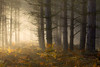 Moods of a Forest (jactoll) Tags: sambourne coughton alcester warwickshire forest trees woods light mist misty fog foggy landscape appicoftheweek sony a6000 zeiss 70200mmf4 jactoll