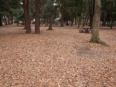 落ち葉 (fallen leaves) (Paul_ (shin.ogata)) Tags: 砧 公園 kinuta park 落葉 leaves