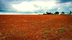 "atherton-tablelands-queensland-australia_30065196472_o • <a style=""font-size:0.8em;"" href=""http://www.flickr.com/photos/146187037@N03/31940914726/"" target=""_blank"">View on Flickr</a>"