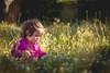 (Bernardo Guzman Roa) Tags: 50mm 18 canon t2i 550d flores pasto infancia