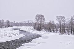 still snowin. still dreamin... (J. Kaphan Studios) Tags: landscape landscapephotography mypubliclands jacksonhole wyoming river rivers winter snow trees grandtetonnationalpark fujixt1 fujixseries fujifilm travel travelphotography wanderlust