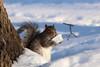 Human food (g.cordova@ymail.com) Tags: surprised winter litter environmentalimpact squirrel