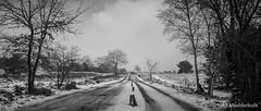 P1180020-4.jpg (loenatik) Tags: assel gelderland kootwijk nature nederland radiokootwijk sneeuw snow tree winter sky