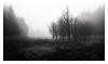 The Garrison (Dylan Nardini) Tags: dreak january 2017 nikon winter mist fog trees d810 scotland clouds