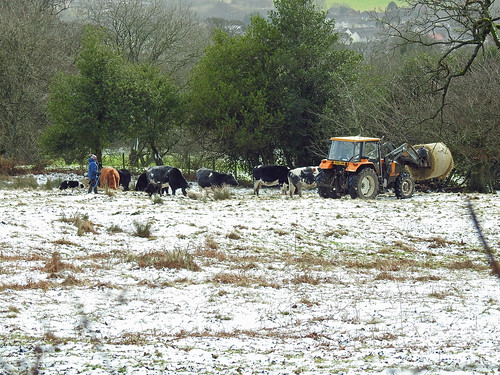 Feeding Time! Yew Tree Farm, Mountain Road, Blaen Bran, Upper Cwmbran