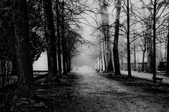 Ein Morgenspaziergang im Nebel - A walk on a foggy spring morning (cammino5) Tags: februar 2017 franken würzburg deutschland hofgarten nebel fog allee bäume frühling spring winter nature mist bnw