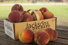 Autumn Star-8167 (Jackson's Orchard) Tags: kentucky peach orchard bowlinggreen bowlinggreenky jacksonsorchard autumnstar