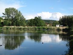 am Teich (germancute) Tags: flower nature germany landscape deutschland thüringen duck pond thuringia turm teich ente landschaft arnstadt spitzen germancute