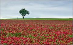 Les paysages de Puisaye-Forterre (Office de Tourisme Portes de Puisaye-Forterre) Tags: paysage bourgogne yonne nièvre puisaye puisayeforterre bourgognebuissonière