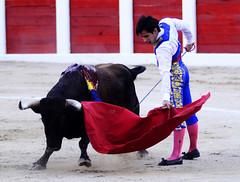Corridas de Toros. (eduardovfotografo) Tags: de venezuela bull toros corrida toro bullfighting