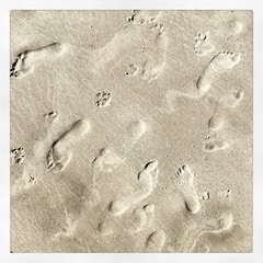 _life is a beach (fot_oKraM) Tags: beach strand sand footprints july northsea juli nordsee spo 2015 sanktpeterording
