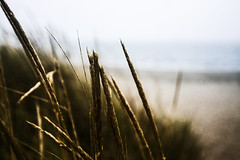 PACIFIC NORTHWEST 34 (Detective Steve) Tags: plants beach nature grass solitude pacificnorthwest oceanshores natureycrap