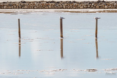 Rest (rolmoscas26) Tags: 2016 aves calblanque cartagena paisaje salinas