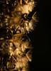 My natural fireworks (grus_p) Tags: naturalfirework newyear garden seeds flower winter light luminanceboréale finland beautyofnature beautyofcalmness calmness